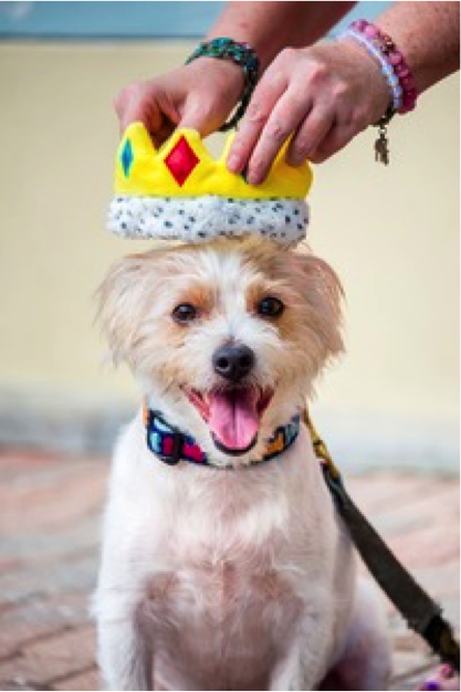 Mayor Puppypants: St. Pete has a dog mayor (and no, his first name isn't Rick)